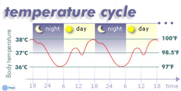 睡眠与体温.png